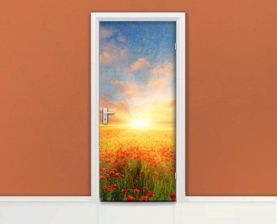 poppy-seed-meadow-sunset-spring-summer-green